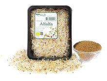 Kiemen, alfalfa, 1oogr, De Peuleschil