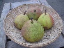 Biologische Saint Remy peren - Hekkert Hoogstamfruit